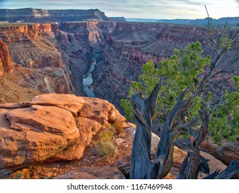 Toroweap overlook of Grand Canyon National Park, North Ridge, remote place. Sunrise. Tree with green leaves on the edge