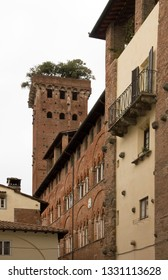 Torre Guinigi, via st andrea in Lucca (Tuscany Italy)