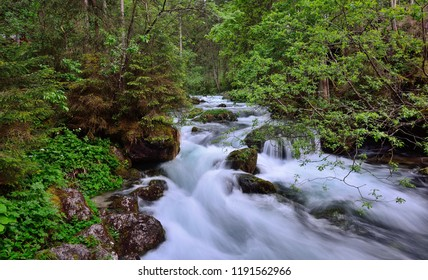 Torrential river in the forest