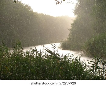 Torrential summer rain over the river, surrounded by green reeds.