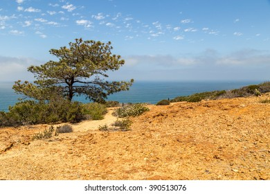 Torrey Pines State Reserve in San Diego