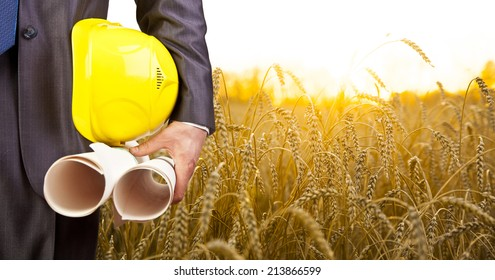 torso engineer or worker hand holding yellow helmet for workers security and blueprint paper plan against the background of yelloe sunset reap wheat field and sunrise sky and forest in perspective