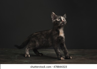 A tort-calico kitten stands upon a wooden crate in a dark rustic vintage barn like setting