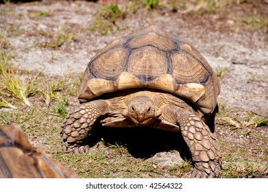 Tortoise crawling in grassy area