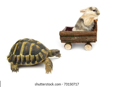 The Tortoise and the Hare Story Alternative Version