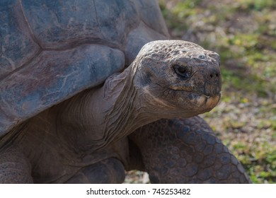 A tortoise head and shell