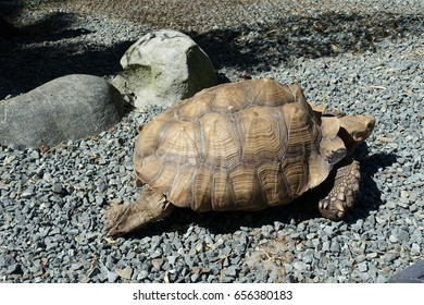 Tortoise in a Hurry