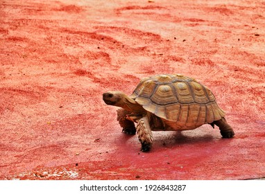 A tortoise moving on mud