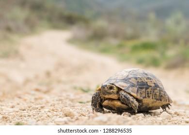 Tortoise on Mountain Trail