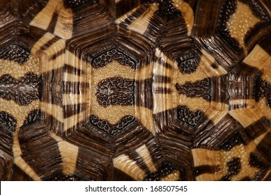 tortoise shell in black, brown and beige. background