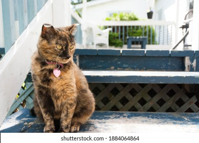 Tortoise shell female cat on stairs
