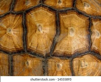 tortoise shell pattern