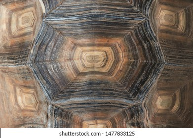 Tortoise shell texture close up. Background.