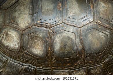 tortoise turtle shell texture detail.