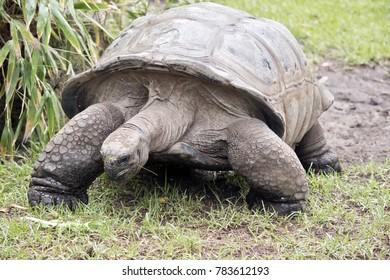 the tortoise was walking in a paddock