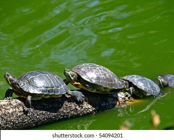 Tortoises Doing Sunbath