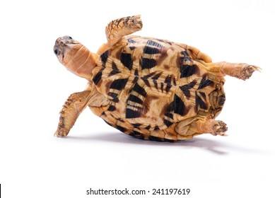 Turtle Upside Down Images Stock Photos Vectors Shutterstock
