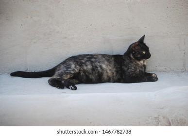 Tortoiseshell Cat Against Concrete Wall