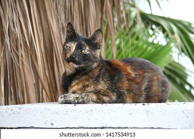 Tortoiseshell cat on a wall