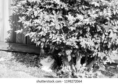 Tortoiseshell cat resting in the garden.