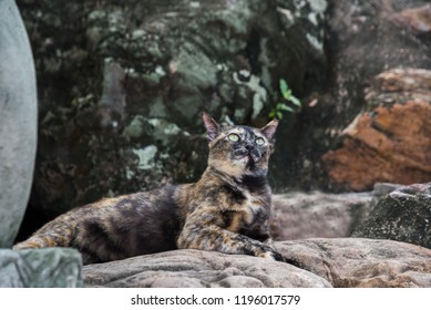 tortoiseshell cat, three colors cat , calico cat. This cat breeds is very cute and pretty.