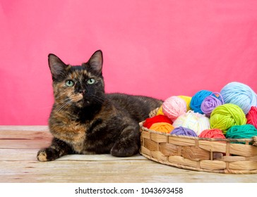 tortoiseshell tortie tabby cat laying on a wood surface, bright pink background, basket of yarn multiple colors looking at viewer.