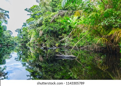 Tortuguero national park background