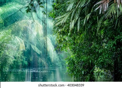 Tortuguero National Park, Rainforest, Costa Rica, Caribbean coast, Central America