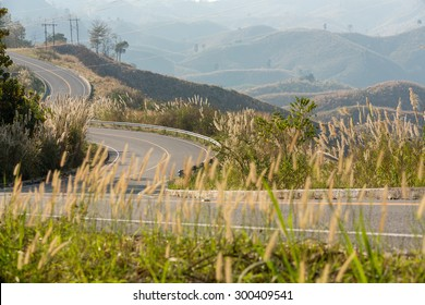 Tortuous road on top of the mountain with beautiful wild flower along side, Nan province, Thailand