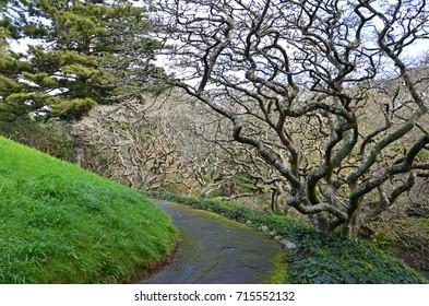 Tortuous tree in botanic garden of Wellington