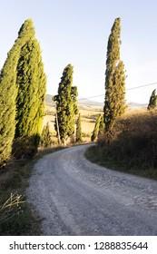 Toscana cipressi panorama