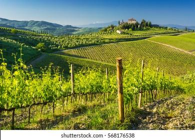TOSCANY,ITALY-MAY 31, 2016: Amazing landscape of vineyards in Toscany,Italy