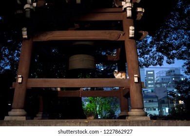 Toshima-Ku, Tokyo / Japan - November 9th 2018: A cat sit near the Buddhist bell of the Ikosanhomyoji Temple in Ikebukuro by night.