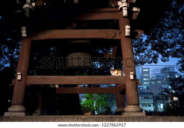 Toshima-Ku, Tokyo / Japan - November 9th 2018: A cat sit near the Buddhist bell of the Ikosanhomyoji Temple in Ikebukuro by night.