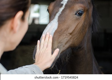 touch horse hand in stable