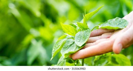 Touching fresh Nature