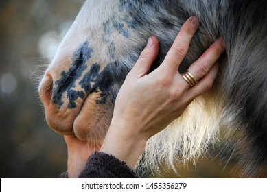 touching furry horse muzzle with a hand