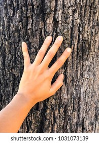 Touching the rough bark of the tree