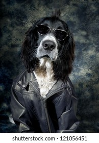 Tough dog with an attitude and leather jacket
