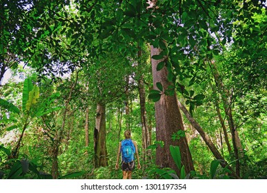 Touris hiking in the deep jungle of the Khao Yai national park in Thailand , Asia
