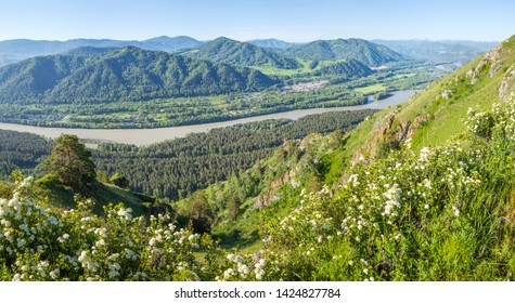 Tourism in Altay, Russia. View of the valley and the Katun River from the mountain. Spring panoramic view. Green forests and meadows.