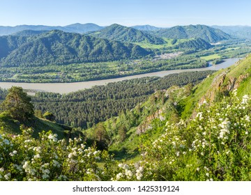 Tourism in Altay, Russia. View of the valley and the Katun River from the mountain. Spring view. Green forests and meadows.