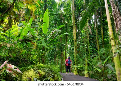 Tourist admiring lush tropical vegetation of the Hawaii Tropical Botanical Garden of Big Island of Hawaii, USA