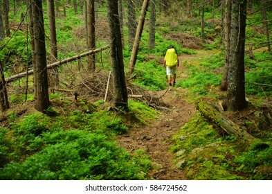 Tourist with big backpack walk through green forest in mountains