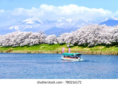 Tourist boat and rows of Cherry blossoms or sakura with the snow-covered Zao Mountain in the background along the bank of Shiroishi river in Miyagi prefecture, Japan