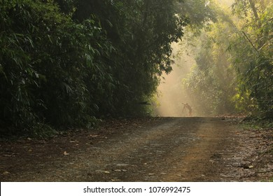 Tourist enjoy the beauty of nature through the camera at Kaeng Krachan National Park Phetchaburi province Thailand