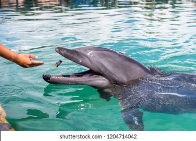 Tourist feed Dolphin