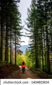 Tourist in the forest, Poland, Rudawy Janowickie, Dolnośląskie