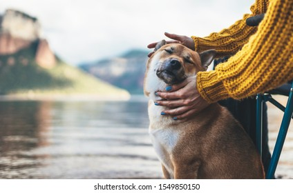 tourist friend girl together tender dog on background mountain, female hands hugging puppy pet closed eyes on lake shore nature trip, friendship love concept