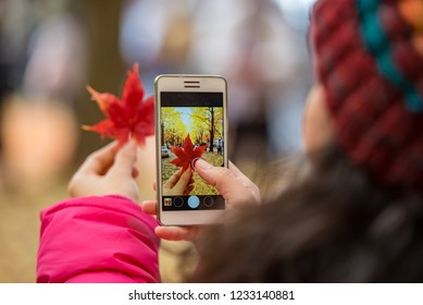 Tourist hand holding mobile phone while taking a photograph of maple leaf in foliage season, traveling take photo by mobile phone concept.